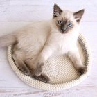 Simple Crocheted Cat Bed free crochet pattern