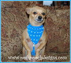 Beaded Dog Bandana free crochet pattern